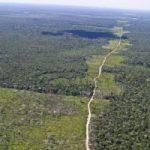 267177107-amazonia-floresta-amazonica-agencia-brasil-300×200.jpg